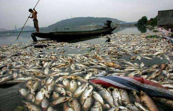 山东照瑞环保带您了解一下我国水环境污染现状