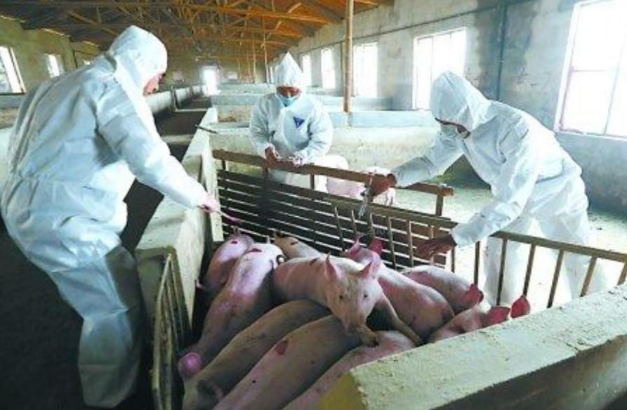 养猪厂废水处理-东保絮凝剂